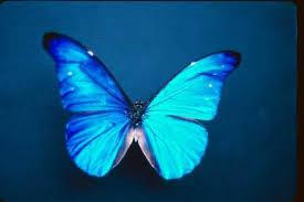 teoria fluturelui